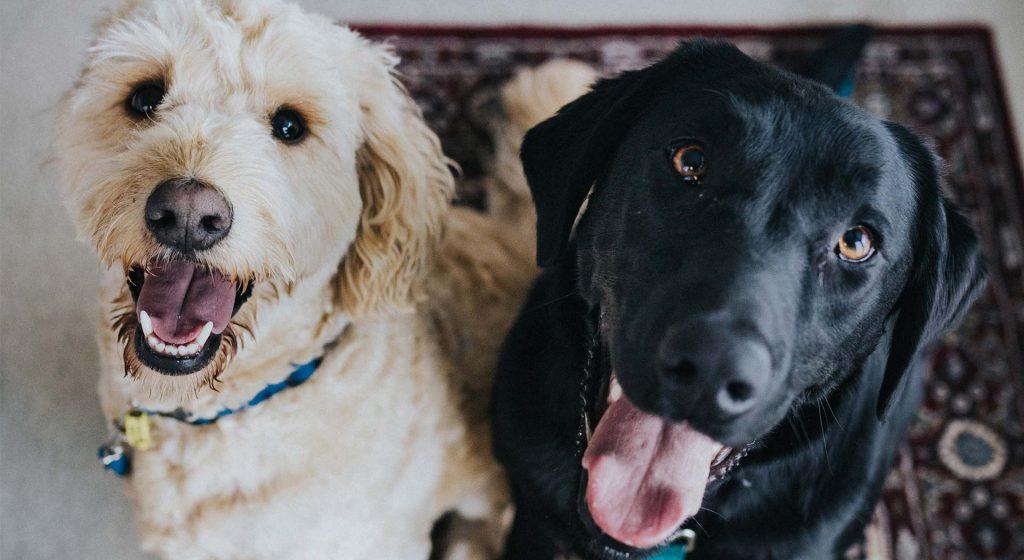 Dierencentrum De Mère - honden